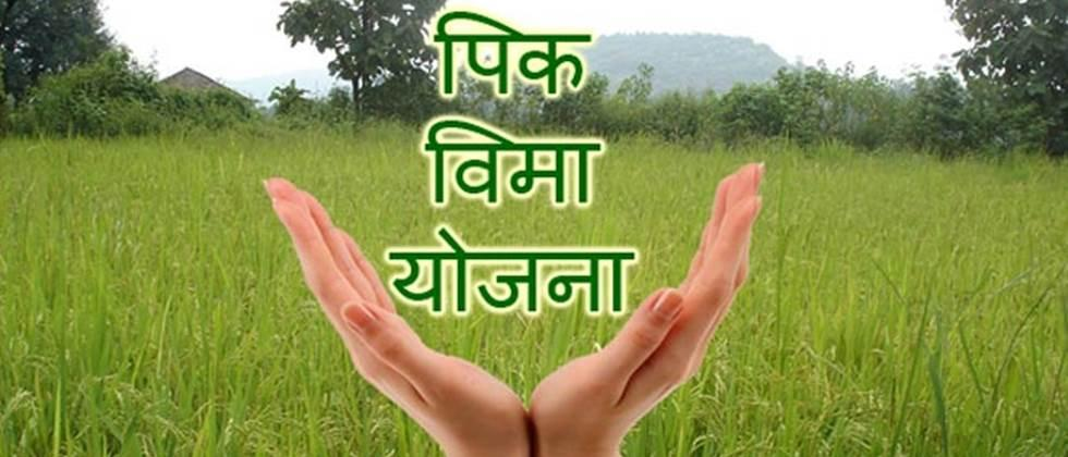 Kharif crop insurance scheme implemented for Nanded district