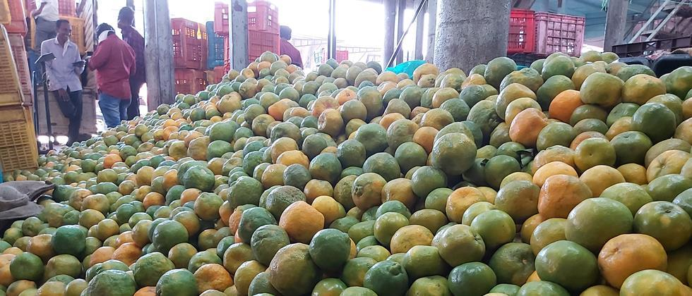 In Aurangabad, orange is 500 to 1000 rupees per quintal