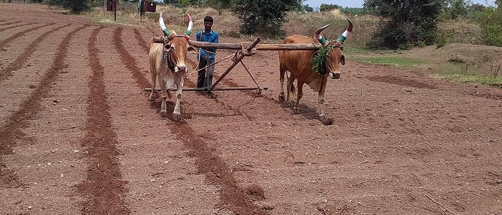 paddy soyabean sowing area may increase