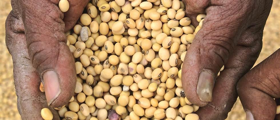 Save soybean seeds for next season