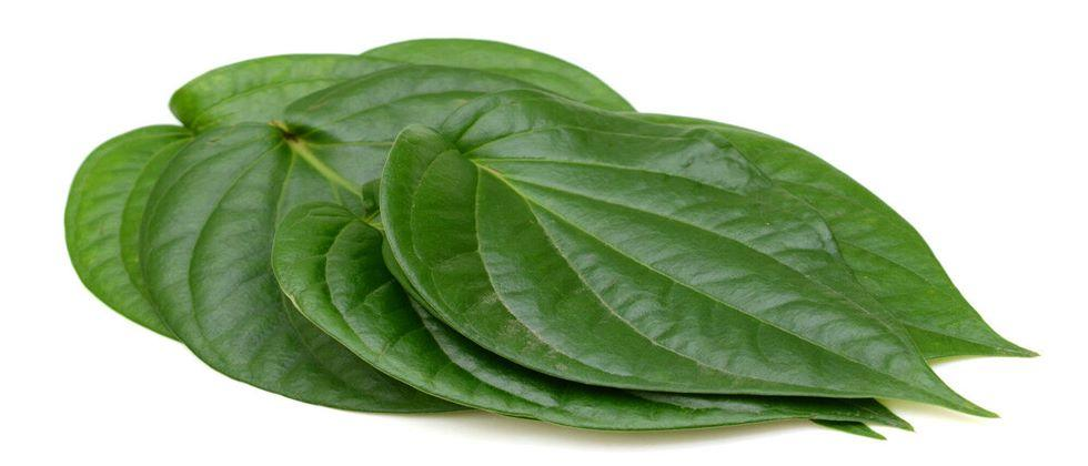 Health beneficial betal vine leaf
