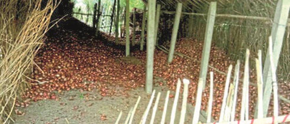 Thieves raid onions and other materials at Nampur