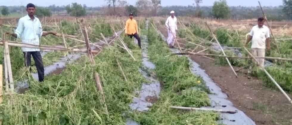 Damage to crops due to heavy rain in Nilanga taluka