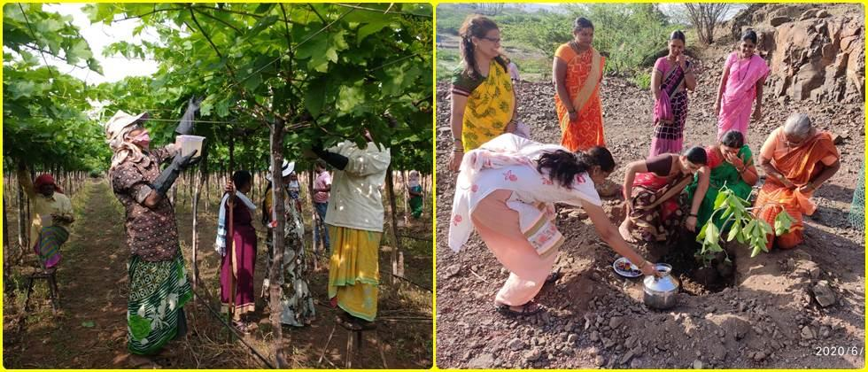 Trained female laborers while working in the vineyard.