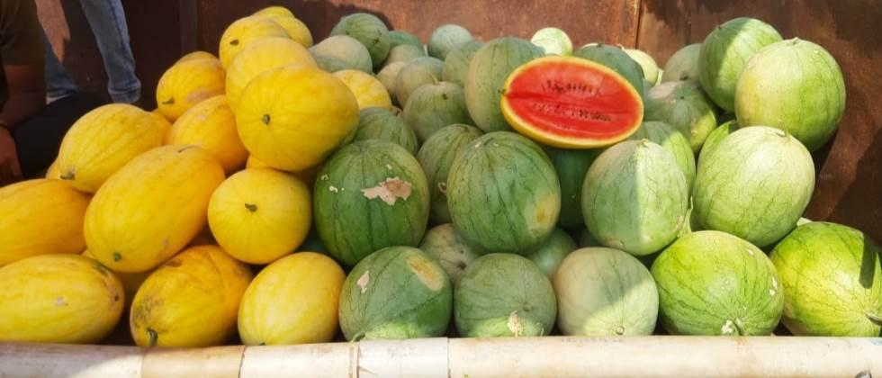 Sale of 65 tons of watermelon through social media