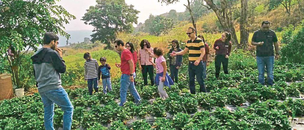 Purchase of strawberries directly from the field from tourists