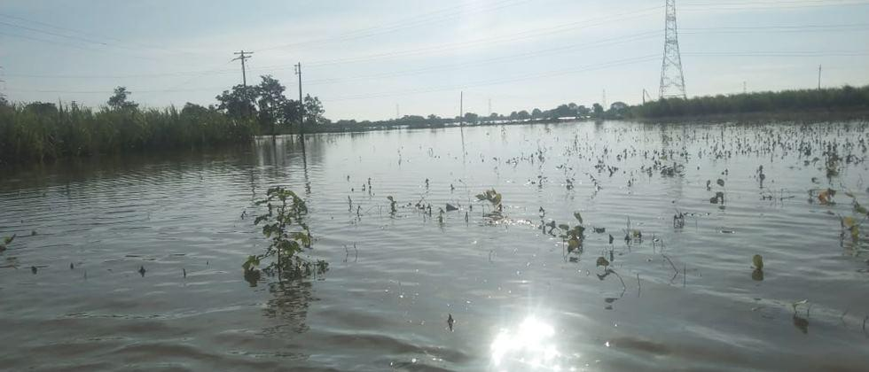 Heavy rains destroy crops on 12 lakh hectares