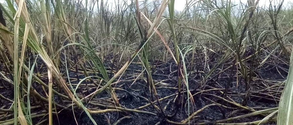 Burnt nine acres of sugarcane due to short circuit