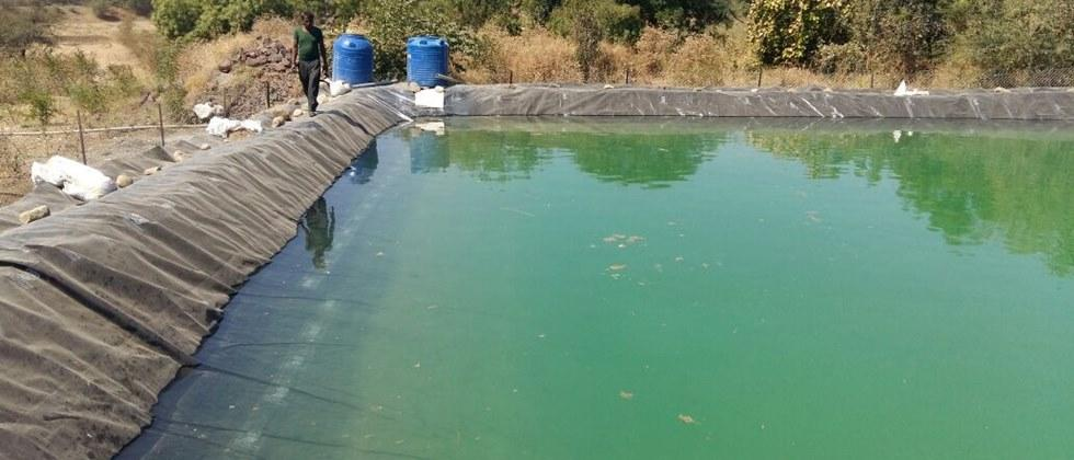 Proper water level should be maintained in the farm pond before releasing the fish seed