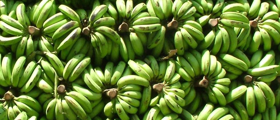 Banana prices stable in Khandesh