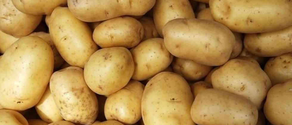 Potatoes cost Rs 800 to Rs 1,800 per quintal in the state