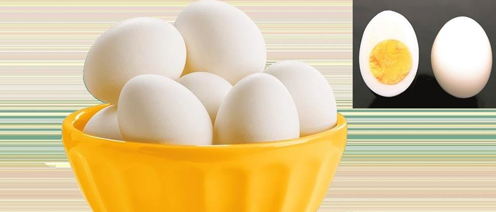 importance of egg in diet