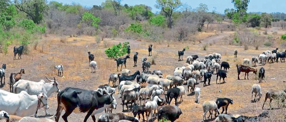 Demand for Rs 2 lakh for damaged shepherds