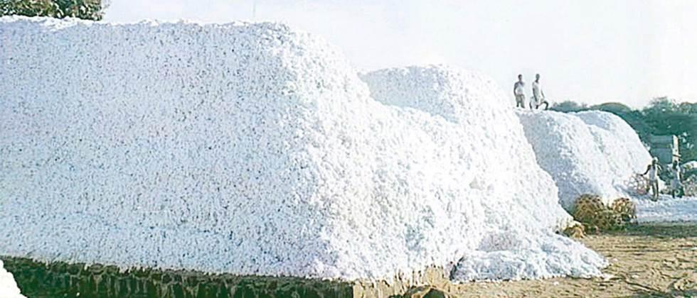 cotton give to CCI for guarantee rate