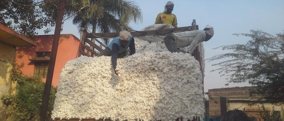 Due to increase in stocks in Khandesh, cotton, It's time to dump her and move on