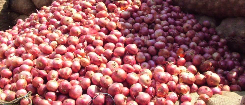 Onion prices in the state range from Rs. 100 to Rs. 1000