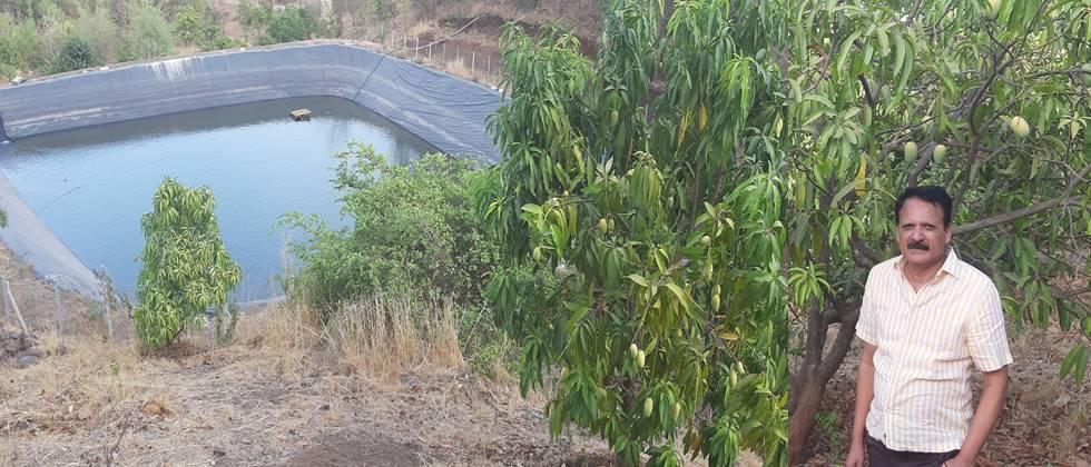 Farm pond and mango cultivation