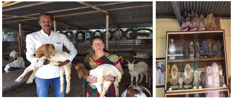 Pawar-Patil family engaged in goat rearing and the awards they receive