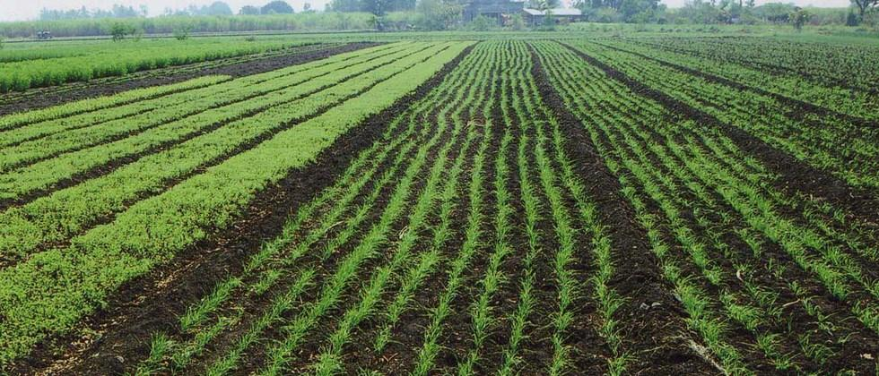 integrated nutrient management of green gram and wheat