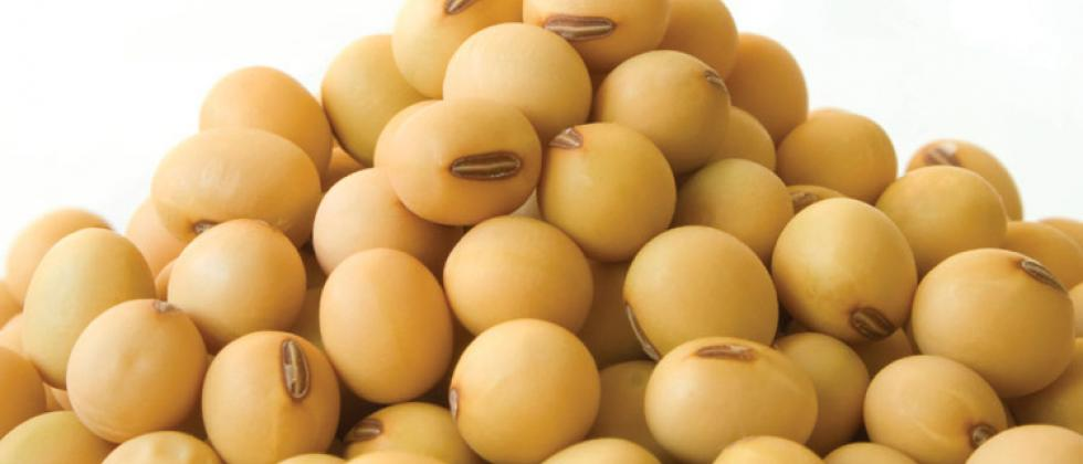 soybean rate may increase