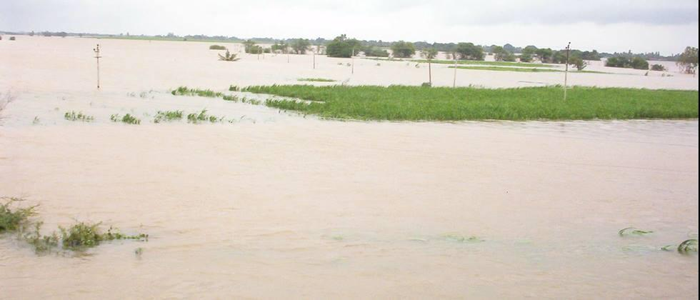 factories ignore to cutting flood effected sugarcane