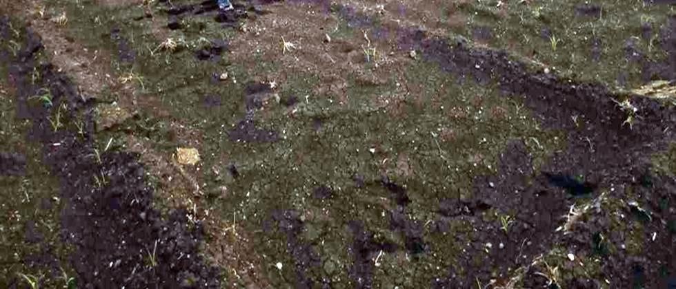 complaints regarding seed germination in district