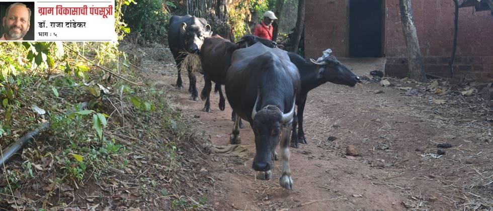 Accelerate animal husbandry from women's groups