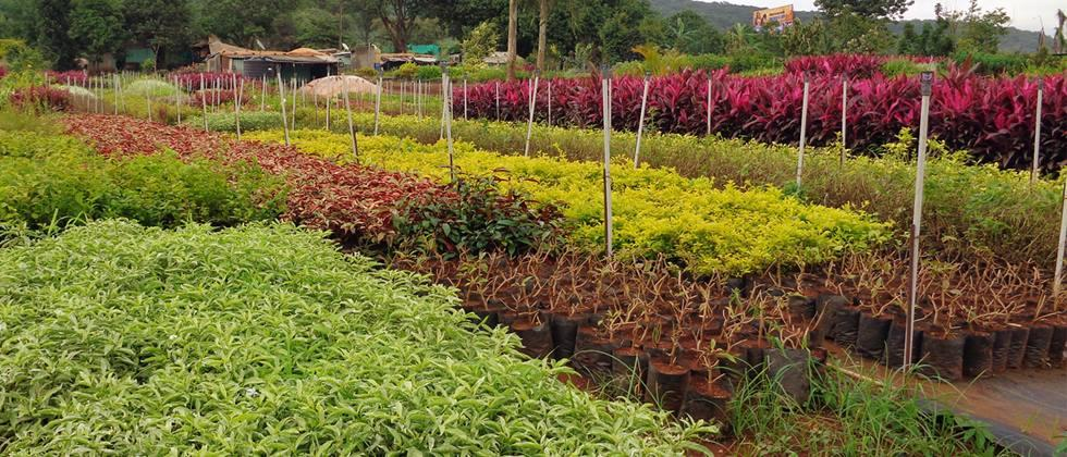 Growing response to 'My plant, my responsibility' in Solapur district