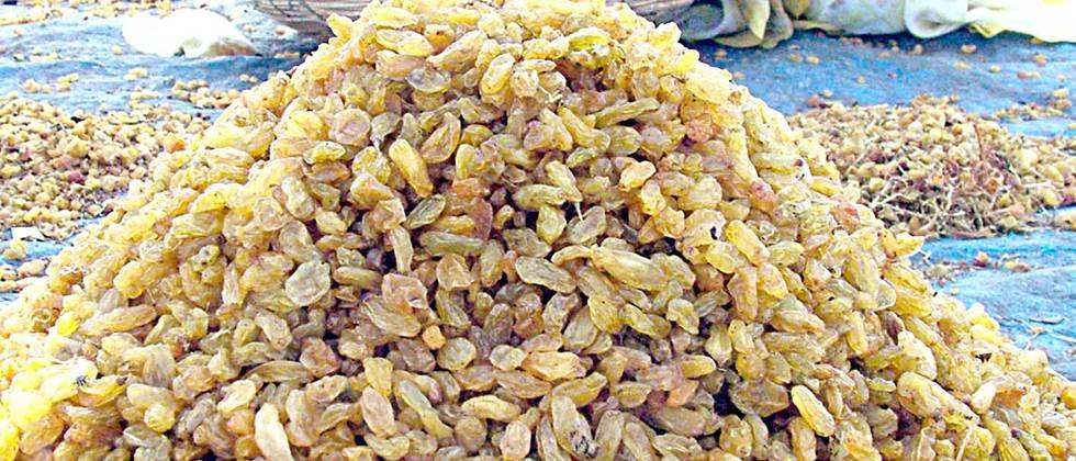 The highest rate could get to Raisins in Sangli?