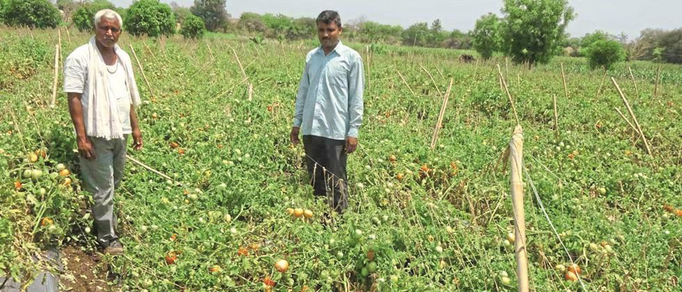 loss of crops, vegetables due to heavy rain in Chakur taluka