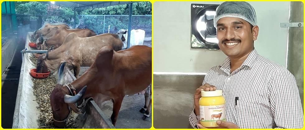 Raising of Gir cows and the Ghee produced from their milk