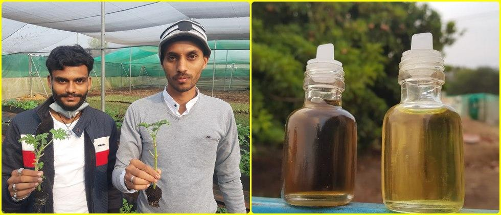 two young friends from nashik district becomes geranium oil entrepreneurs