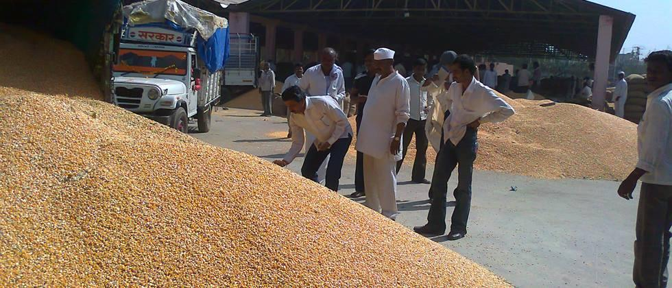 Payment of maize in Aurangabad district