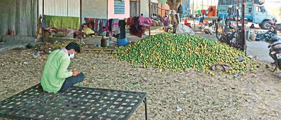 In Aurangabad, sweet oranges cost Rs 600 to Rs 1,200 per quintal
