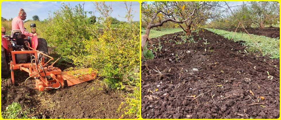 Use of one side rotor in pomegranate orchard. This makes the soil humus rich. The given fertilizers interfere with the soil.