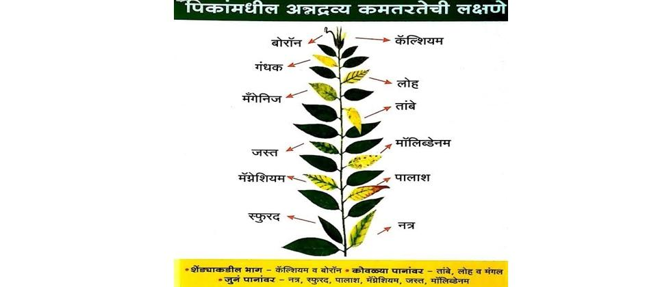 Remedies for nutrient deficiency of crops