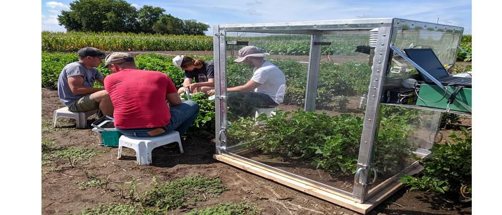 Scientists further cowpea research--boosting canopy CO२ assimilation, water-use efficienct