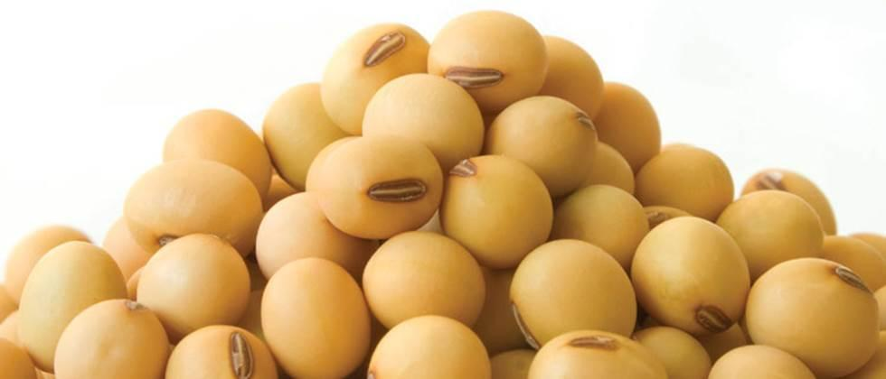 Soybeans rate Rs 3,000 to Rs 6,700 per quintal in the state