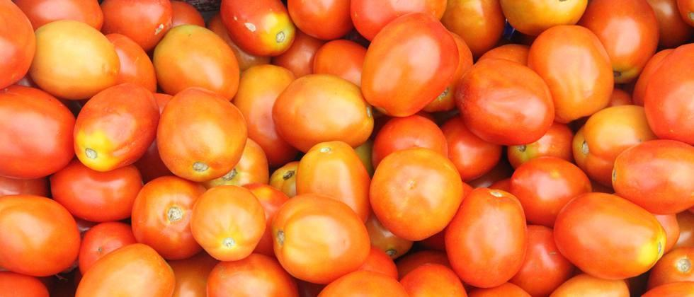 400 to 1550 per quintal of tomatoes in the state