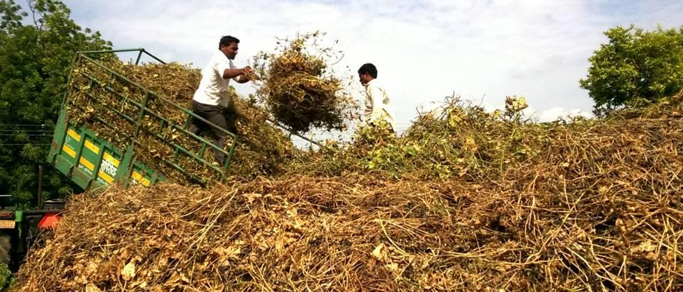In Pune division sowing increased over three lakh hectares
