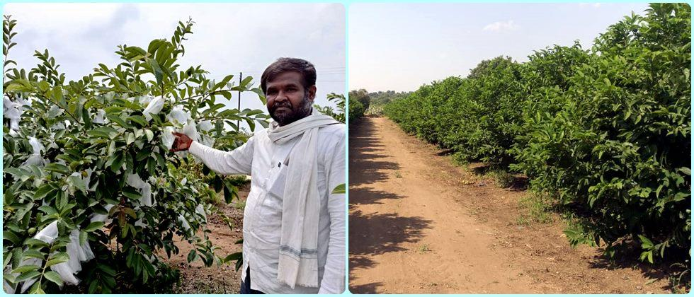 fruit crops gives more economic stability