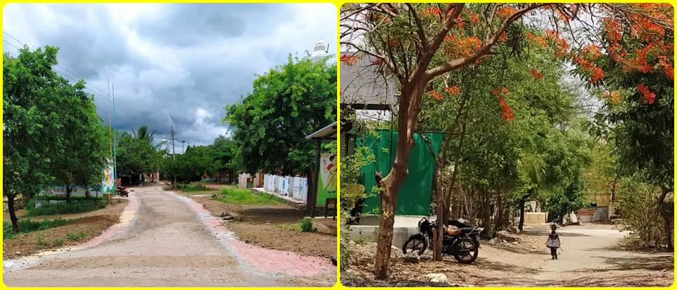 The main road of Sarpadoh village is greeted by various, beautiful trees.