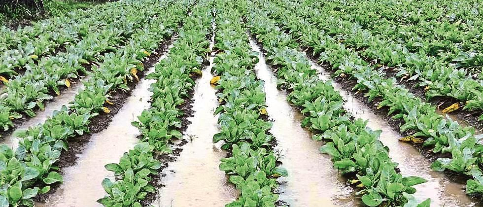 Agriculture should be accepted by agriculture department report for crop insurance