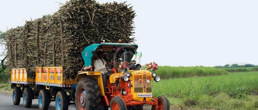 sugarcane vehicles Follow the traffic rules