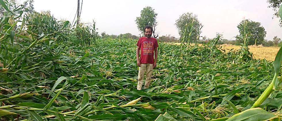 Rainfall crops in the Valsavangi area obstruct