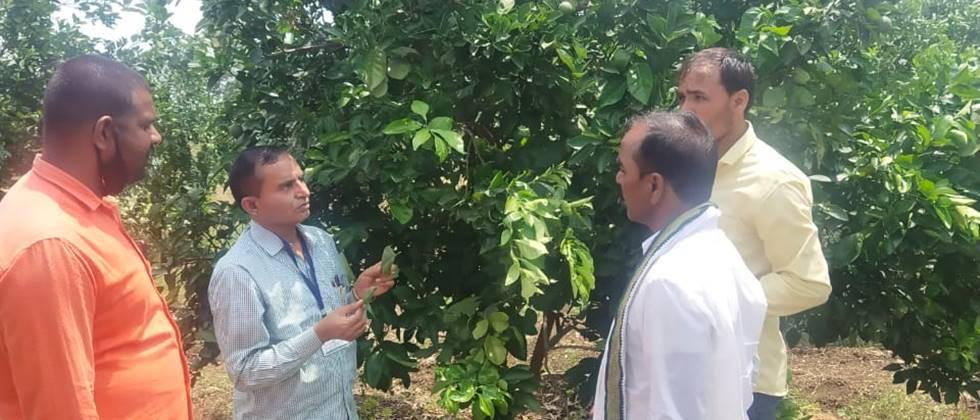 Garden survey by research center for selection of citrus varieties