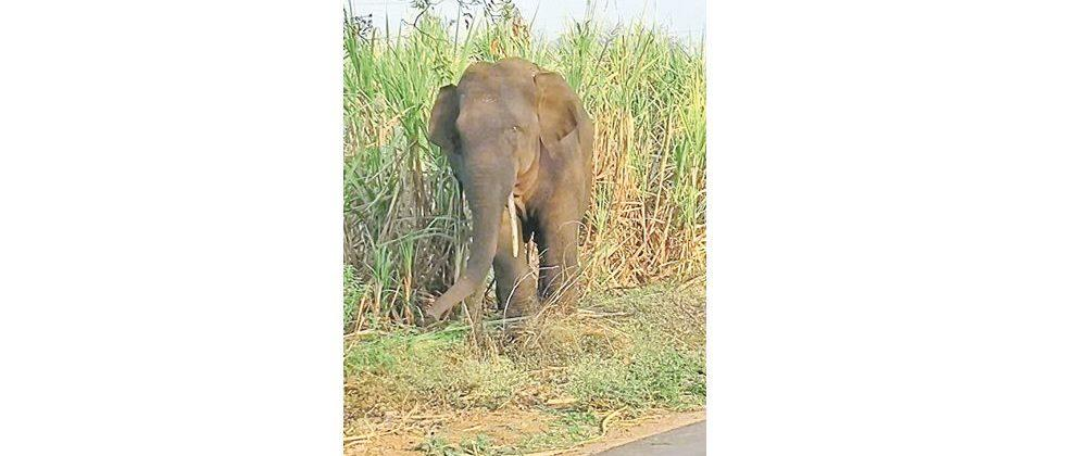 An elephant was seen at Maruti Mal