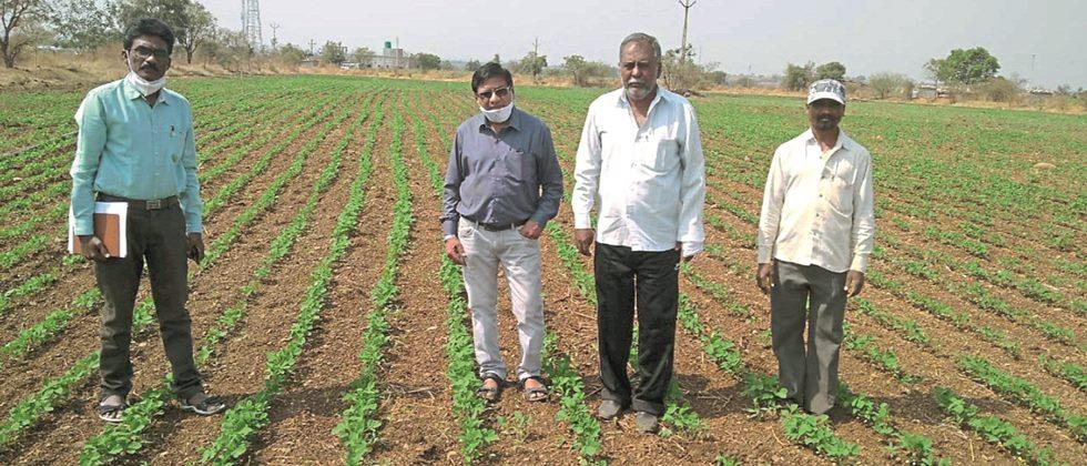 Mahabeej produces soybean seeds on 210 hectares