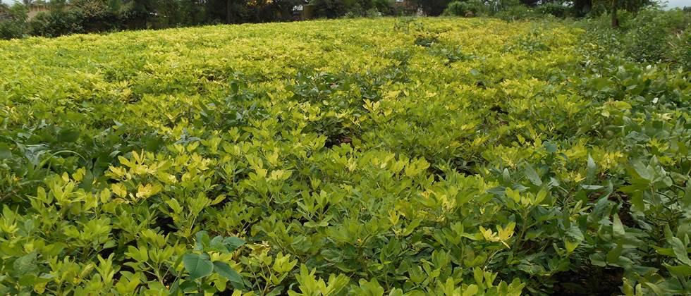 Summer crops on four thousand hectares in Nagar district