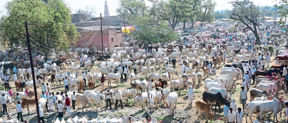 Farmers disappointed by closure of bull market in Akola